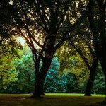 Baker park reserve