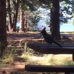 Merrill campground