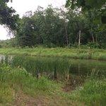 Knutson dam