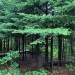 Temperance state park