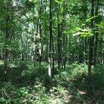 Robertsville state park