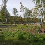 Birch grove wisconsin