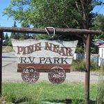 Pine near rv park