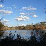 Payne lake west side