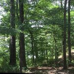 Cane creek state park