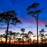 Jonathan dickinson state park