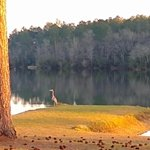 Lake stone campground