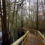 Manatee springs state park