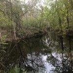 Suwannee river state park