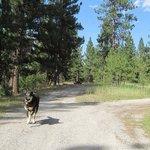 Lyman lake campground