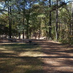 Old highway 41 campground