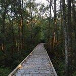 Reed bingham state park