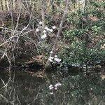 Whitewater creek park