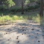 Hunters camp trailhead