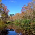 Palmetto island state park