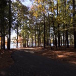Piney grove campground