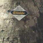 Curtis creek campground pisgah nf