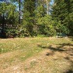 Crooked tree motel and rv park