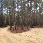 Little pee dee state park