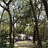 A campground in Ocala National Forest